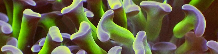 Жесткие кораллы