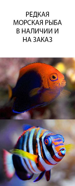 Редкая морская рыба в наличии и на заказ